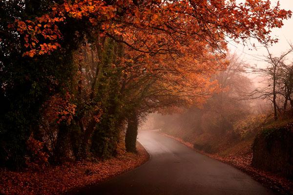 foliage, foliage d'autunno